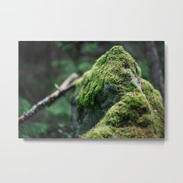 Moss on a rock deep in the forest Metal Print