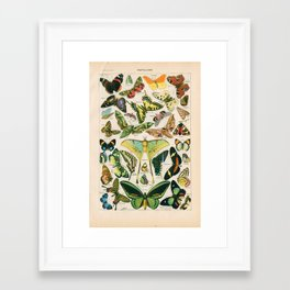 Vintage Butterfly Print Framed Art Print