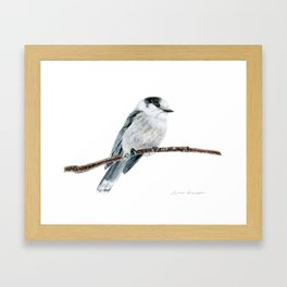 Gray Jay by Teresa Thompson Framed Art Print