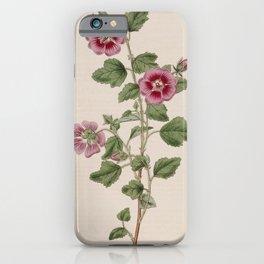 Flower 561 malva grossularifolia inodora Gooseberry leaved Cape Mallow13 iPhone Case
