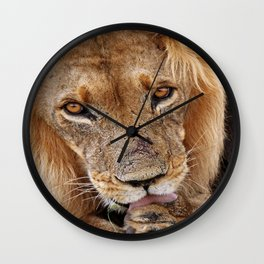 The lion - Africa wildlife Wall Clock