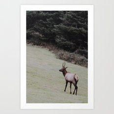 Elk on the Road Art Print