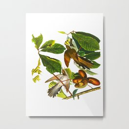 Yellow-billed Cuckoo Bird Metal Print