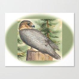 Merlin Falcon (Keir) Canvas Print
