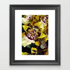 Leopard Orchid Framed Art Print