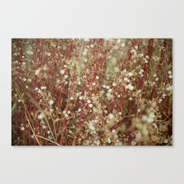 gently gentle #1 Canvas Print