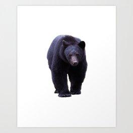 Sacred Path - Black Bear Walking Art Print