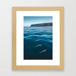 Dolphin's Off Kauai's Na Pali Coast Framed Art Print