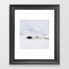 Wild Bison in Winter Framed Art Print