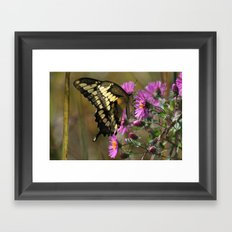 Giant Swallowtail (Papilio cresphontes) Framed Art Print
