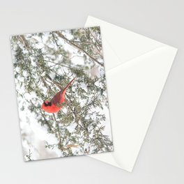 Cardinal on a Snowy Cedar Branch Stationery Cards
