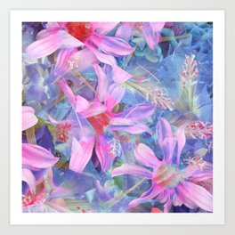 blooming pink and blue daisy flower abstract background Art Print