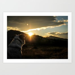 Canine Sunset Art Print