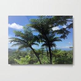 Daintree rainforest fern trees Metal Print