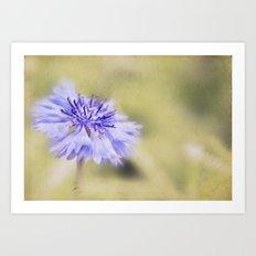 Wild Cornflower Art Print