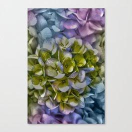 Pastel Hydrangea Canvas Print