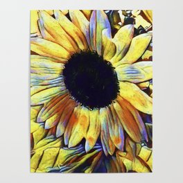 Sunflower After The Storm Poster