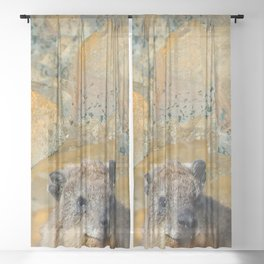 African Rock Hyrax Sheer Curtain