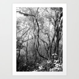 Rainforest No.8 Art Print