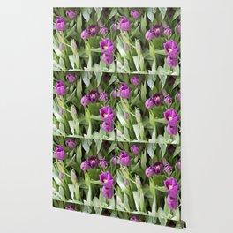 Longwood Gardens Orchid Extravaganza 25 Wallpaper
