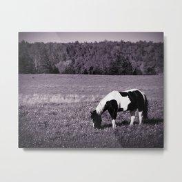 Animal :: Roadside Horse Metal Print