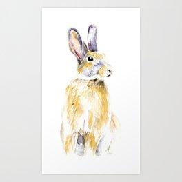 Hare Bunny Art Print