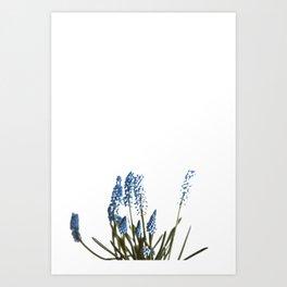 Blue Blossom (Color) Art Print