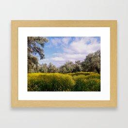 Spring Meadow in Cyprus Framed Art Print