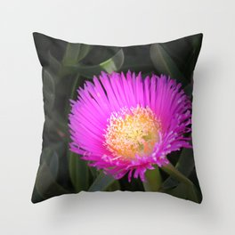 Pink Ice Plant Flower Throw Pillow