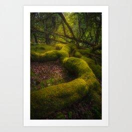 Magical forest - Ireland (RR237) Art Print