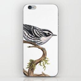 Black-and-White Warbler (Mniotilta varia) iPhone Skin