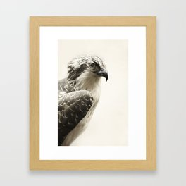 Hawk | Fig .03 Framed Art Print