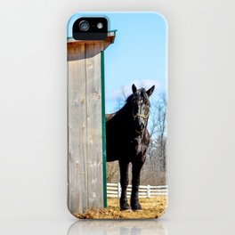 Percheron Horse by Teresa Thompson iPhone Case