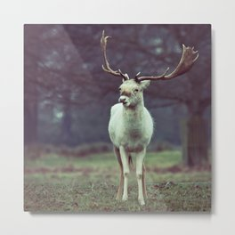 White deer needs your love Metal Print