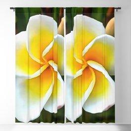 Single Frangipani Blossom Blackout Curtain