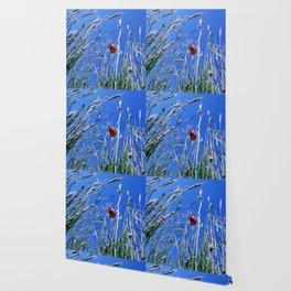 poppy flower no4 Wallpaper