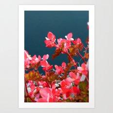 Bay Side Pink Art Print