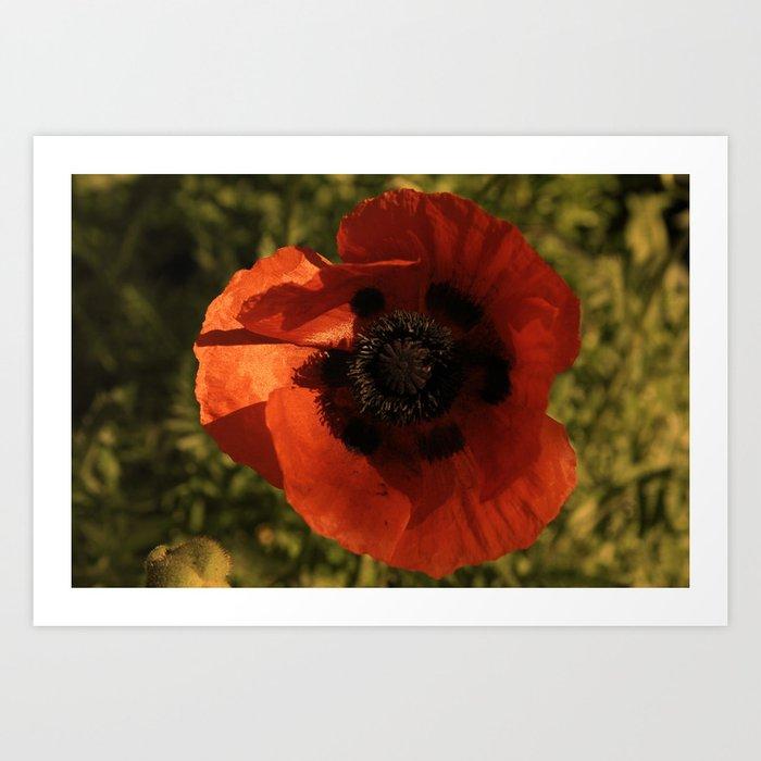 woodstock flowers Art Print