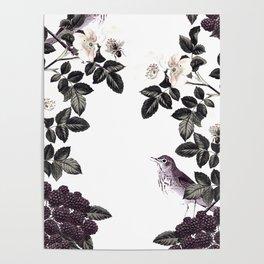 Blackberry Spring Garden - Birds Bees and Flowers Poster