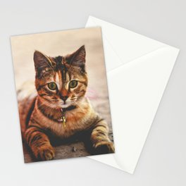 Cute Young Tabby Cat Kitten Kitty Pet Stationery Cards