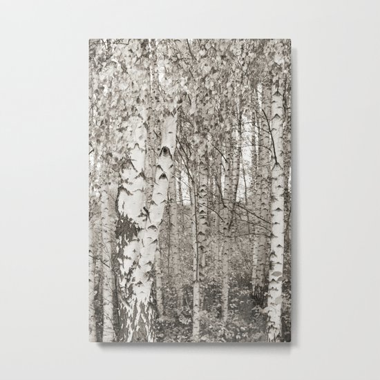 BIRCHWOOD  Metal Print