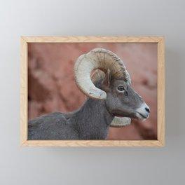 Desert Bighorn, Valley of Fire - II Framed Mini Art Print