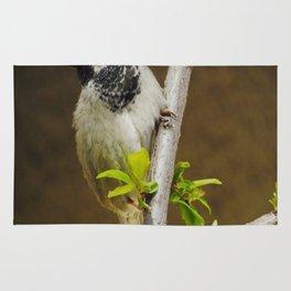 sparrow Rug