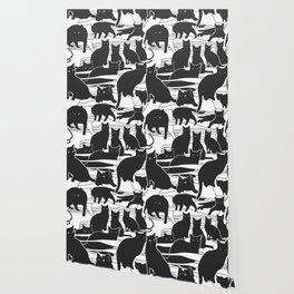 Black cats Wallpaper