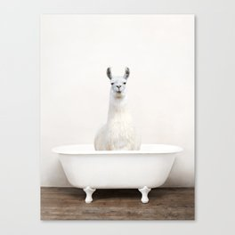 llama in a Vintage Bathtub (c) Canvas Print