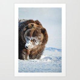 Alaskan Grizzly in Snow - 2 Art Print