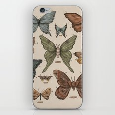 Butterflies and Moth Specimens iPhone & iPod Skin