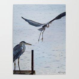 Raindrops Blue Heron Painting Poster