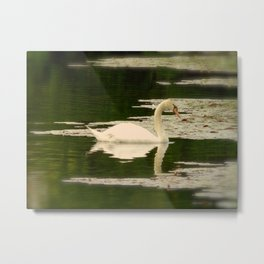 Graceful Swan Metal Print