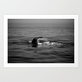 Tail of a Whale Art Print